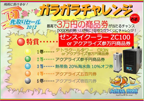夏先取り2012ガラガラ本.jpg
