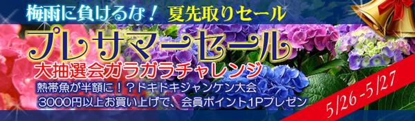 top_banner1.jpg
