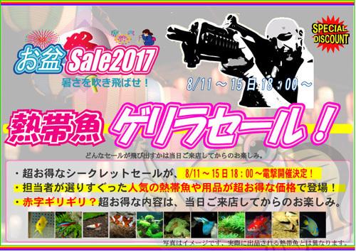 2017お盆ゲリラ.jpg