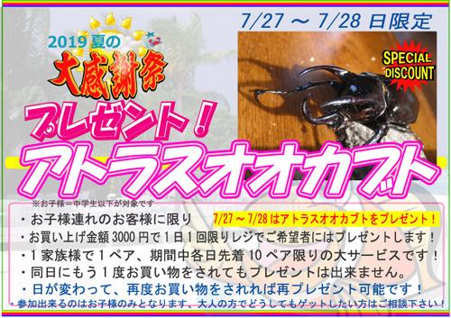 カブト虫プレゼント2019夏のo.jpg